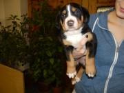 Jessie z kolínského Polabí 1.měsíc